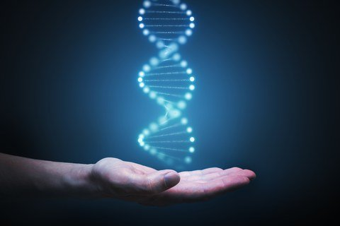 BLM gene